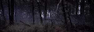 Airsoft locatie Dark Forest Ulicoten